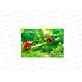 Альбом для рисования 12 листов ТПМ Bugs life, УФ-лак АР12М109/1 *50